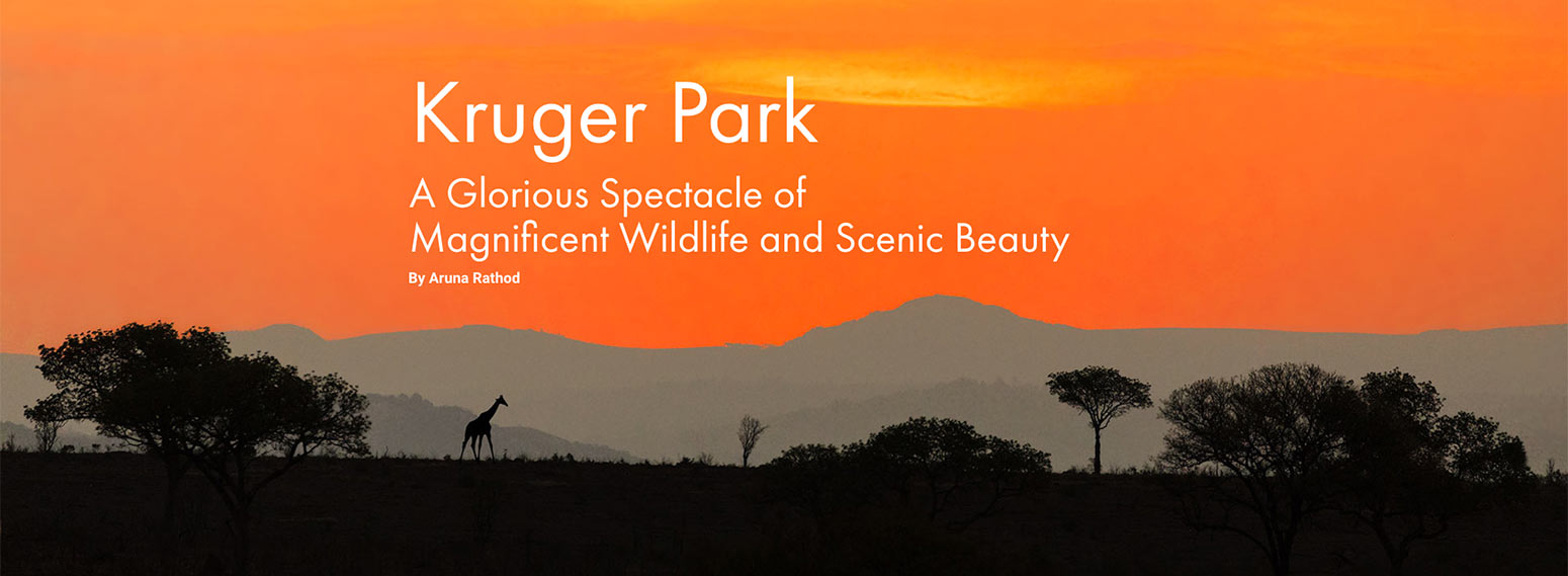 Cover photo of food and travel article about the Kruger Park in The Adress Magazine
